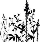 Siluetas de flores y de la hierba Foto de archivo libre de regalías