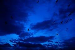 Siluetas de gaviotas en el cielo azul Fotos de archivo libres de regalías