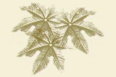 Siluetas de hojas Imagen de archivo libre de regalías