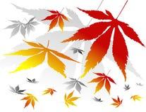 Siluetas de hojas Imagenes de archivo