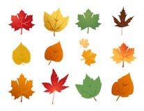 Siluetas de hojas Foto de archivo libre de regalías