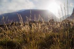 Siluetas de la alta hierba en cíngaro del dello de Riserva Naturale en Sicilia Imagen de archivo libre de regalías