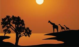 Siluetas de la familia de la jirafa en África Fotografía de archivo