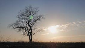Siluetas de la familia feliz que caminan en el prado cerca de un ?rbol grande durante puesta del sol almacen de metraje de vídeo