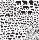 Siluetas de la fauna Asia ilustración del vector