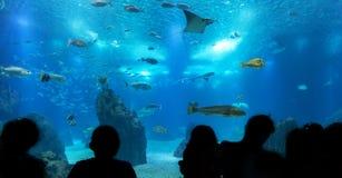 Siluetas de la gente contra el acuario azul Fotografía de archivo