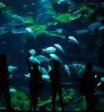 Siluetas de la gente contra el contexto de un acuario grande Fotos de archivo libres de regalías