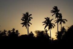 Siluetas de la palma en cielo de la puesta del sol Fotos de archivo