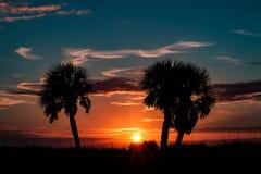 Siluetas de la palmera Foto de archivo libre de regalías