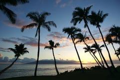 Siluetas de la palmera Foto de archivo