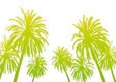 Siluetas de la palmera aisladas Imagen de archivo