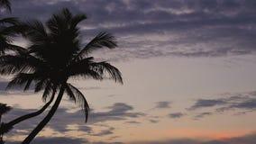 Siluetas de la palmera contra el cielo de la salida del sol con las nubes dramáticas almacen de video