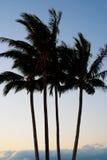 4 siluetas de la palmera contra un fondo del ajuste de Sun Foto de archivo libre de regalías