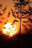 Siluetas de la precipitación en la puesta del sol imagenes de archivo