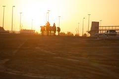 Siluetas de la puesta del sol del club el competir con de camello de Dubai de camellos Foto de archivo