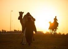 Siluetas de la puesta del sol del club el competir con de camello de Dubai de camellos Fotografía de archivo
