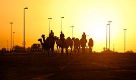 Siluetas de la puesta del sol del club el competir con de camello de Dubai de camellos Fotos de archivo libres de regalías