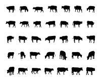 Siluetas de la vaca Imagen de archivo libre de regalías
