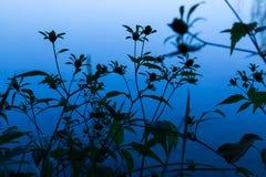 Siluetas de las flores delante del agua azul Fotos de archivo