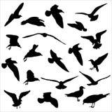 Siluetas de las gaviotas Foto de archivo libre de regalías