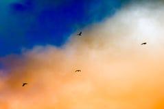 Siluetas de las gaviotas que vuelan debajo de las nubes hermosas de la puesta del sol Foto de archivo libre de regalías