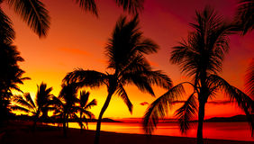 Siluetas de las palmas en una playa tropical Imagenes de archivo