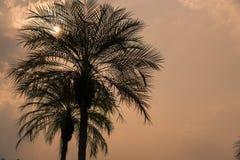 Siluetas de las palmeras contra fondo de la puesta del sol Imagen de archivo libre de regalías