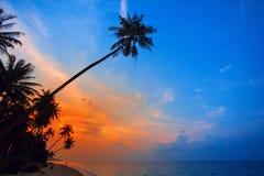 Siluetas de las palmeras en el fondo colorido del cielo Fotos de archivo
