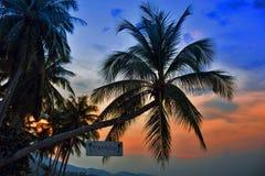Siluetas de las palmeras en el fondo colorido del cielo Fotografía de archivo