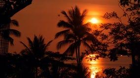 Siluetas de las palmeras en la playa tropical en el tiempo vivo de la puesta del sol Árboles exóticos y sol anaranjado grande almacen de video