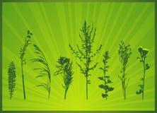 Siluetas de las plantas, vector libre illustration