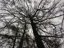 Siluetas de las ramas de árbol contra el cielo del invierno Fotos de archivo libres de regalías