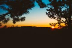 Siluetas de las ramas del abeto en fondo del cielo colorido de la puesta del sol Imagen de archivo libre de regalías