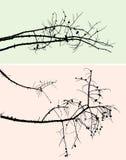 Siluetas de las ramas del pino Fotos de archivo libres de regalías