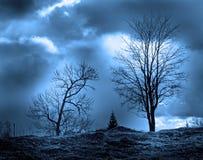 Siluetas de los árboles fotografía de archivo libre de regalías