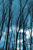 Siluetas de los árboles Fotos de archivo libres de regalías