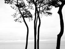 Siluetas de los árboles Fotografía de archivo