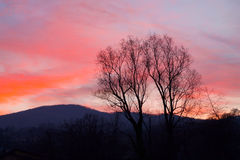 Siluetas de los árboles en la puesta del sol en el cielo vivo Imágenes de archivo libres de regalías