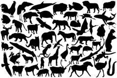 Siluetas de los animales Imagen de archivo libre de regalías