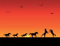 Siluetas de los caballos, puesta del sol Fotografía de archivo libre de regalías