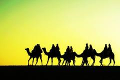 Siluetas de los camellos en dunas en puesta del sol Foto de archivo