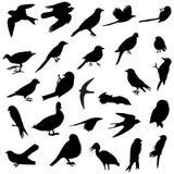 Siluetas de los pájaros ilustración del vector