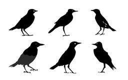 Siluetas de los pájaros aisladas en el vector blanco Foto de archivo libre de regalías