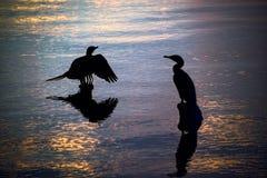 Siluetas de los pájaros que descansan sobre residuos de madera del embarcadero en un lago d Imagen de archivo