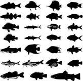 Siluetas de los pescados de los animales de mar fijadas Imagen de archivo libre de regalías