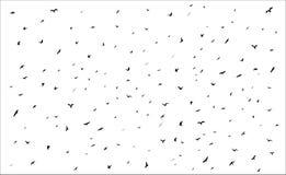 Siluetas de los pájaros de vuelo en el fondo blanco Foto de archivo libre de regalías