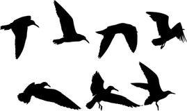 Siluetas de pájaros Fotos de archivo libres de regalías
