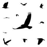 Siluetas de pájaros Foto de archivo libre de regalías