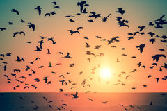 Siluetas de pájaros en la puesta del sol en el océano Animal fotos de archivo