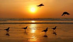 Siluetas de pájaros en puesta del sol. Fotos de archivo libres de regalías